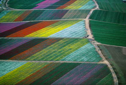 Alex MacLean, 'Flower Fields Carlsbad, California' from 'Growing' series